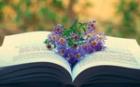 Книжная эстафета яркого лета