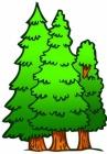 Тайны лесной полянки