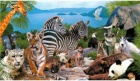 Загляни в мир дикой природы
