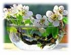 Пускай в душе всегда поёт весна...