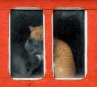 Теплые коты