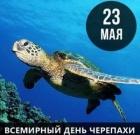 Всё о черепахах
