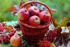Яблочные чтения