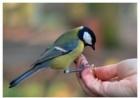 Загадки орнитолога