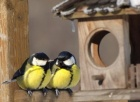 Не жалейте птицам хлеба