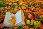 Осенний книгопад в детской библиотеке