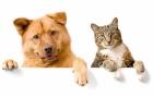 Всего понемножку о собаках и кошках