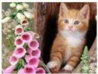 День всех котов: 1 марта!