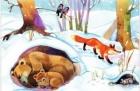 Как дикие звери к зиме готовятся