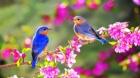 Птички–симпатички